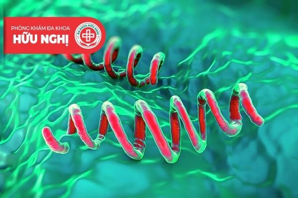 Xoắn khuẩn Treponema pallidum gây bệnh giang mai