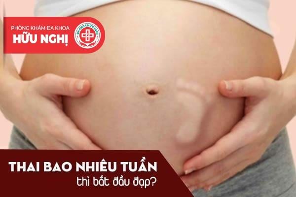 Thai bao nhiêu tuần thì bắt đầu đạp?